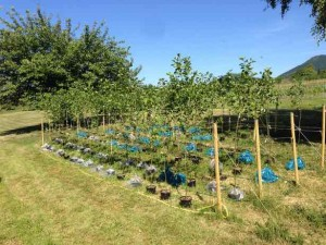 Tree nursery at our field station (photo by J.P. Zubrod)